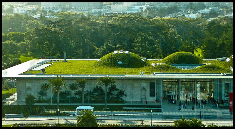 135534d1238294806-greenist-building-san-francisco-grass-roof-green