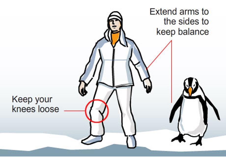 penguin2-1